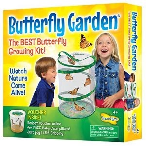 Butterfly Garden - Life Cycle of Butterflies