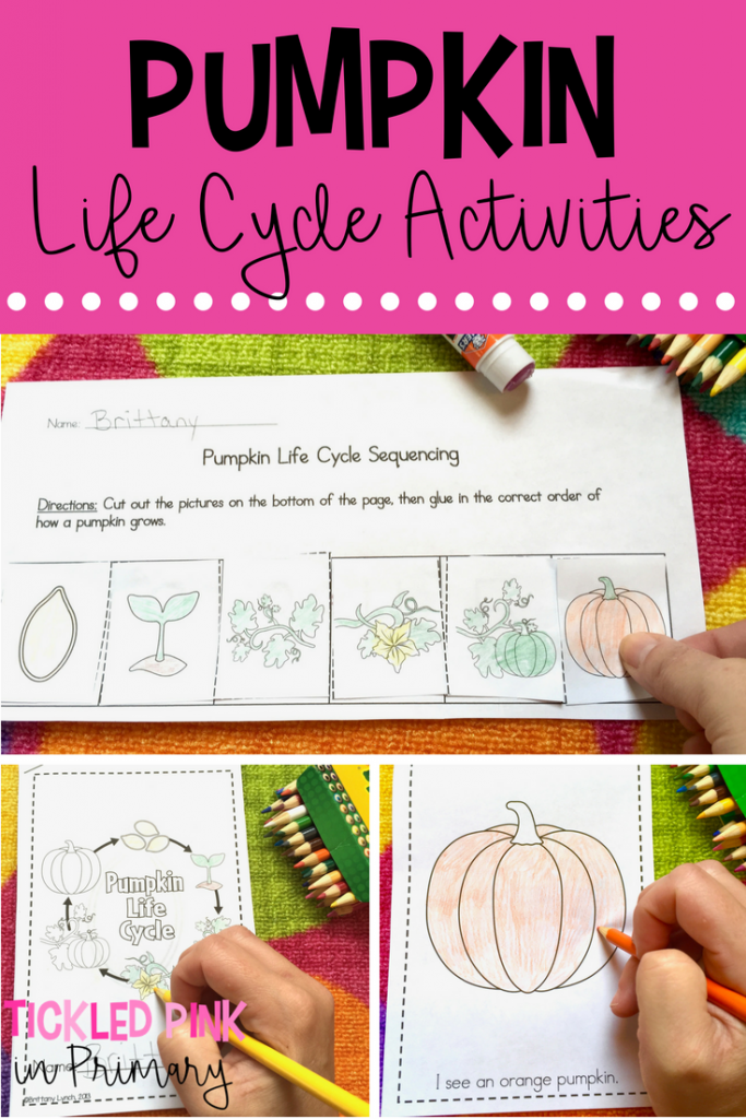 Learning about Pumpkins - Pumpkin Life Cycle Activities