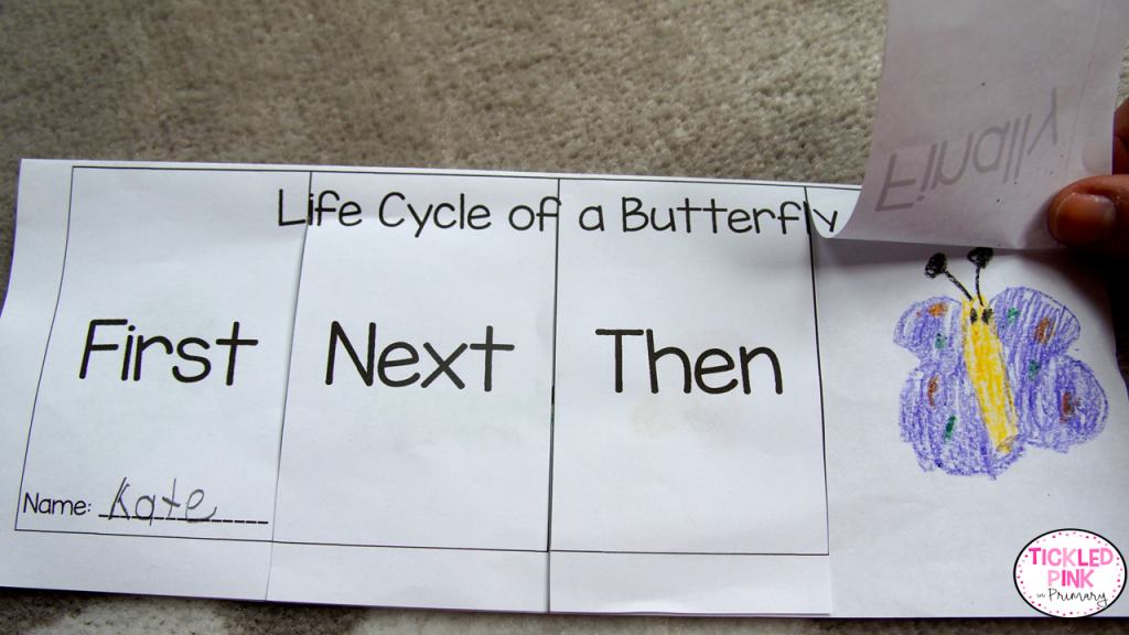 Life cycle of a butterfly flip book