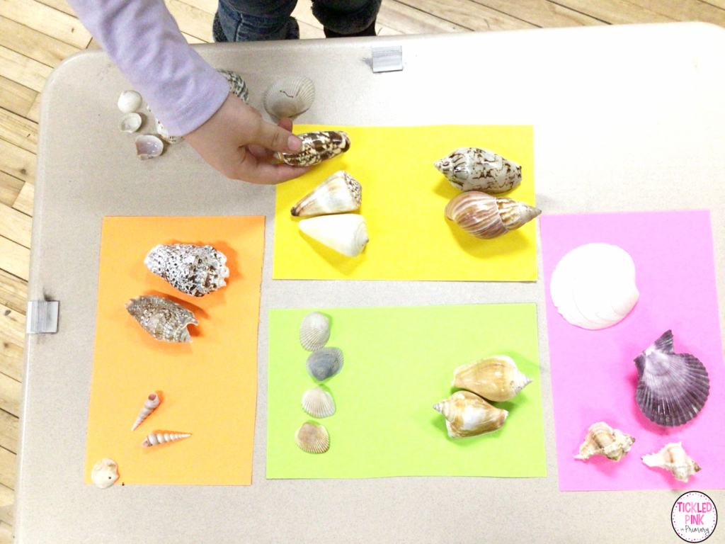 Free shell sorting and craft activity.